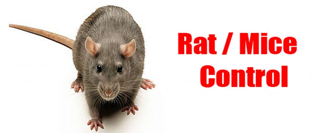 Why You Should Avoid Using Commercially-bought Rat Poisons  In Your Home